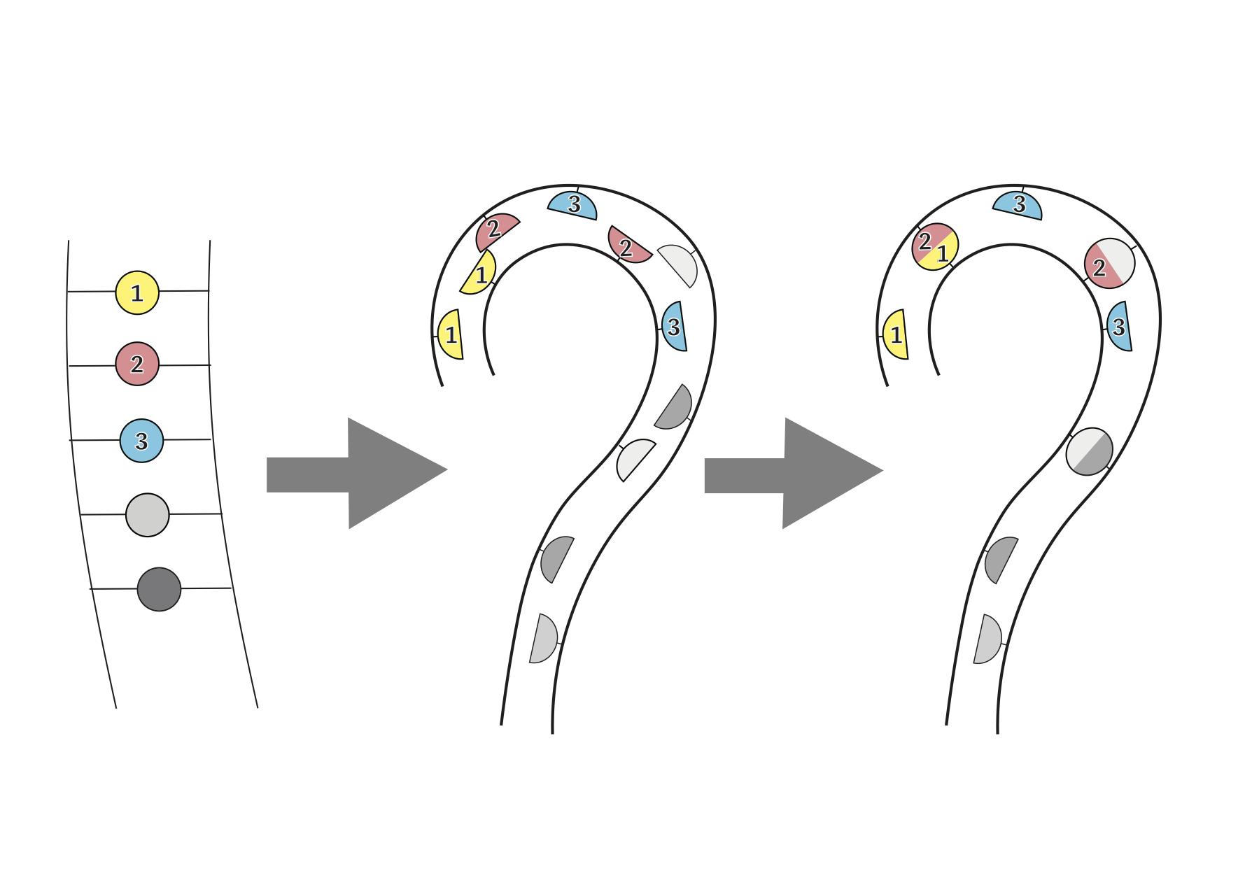 パーマの原理の図